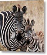 Mama And Baby Zebra Metal Print