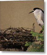 Mama And Nest Metal Print