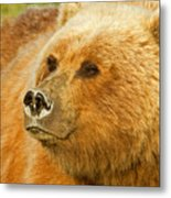 Mama Bear Close Up Metal Print