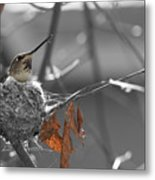Mama Hummingbird Metal Print