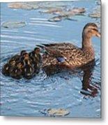 Mama Mallard And Her Ducklings Metal Print
