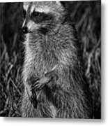 Mama Raccoon Metal Print
