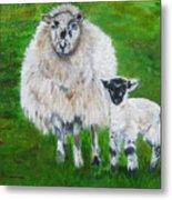 Mamma And Baby Sheep Of Ireland Metal Print
