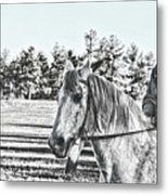 Man And His Horse Metal Print