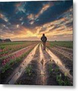 Man Watching Sunrise In Tulip Field Metal Print