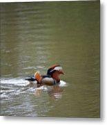 Mandarin Duck 20130507_41 Metal Print