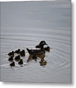 Mandarin Duck And Babes 20130508_227 Metal Print