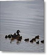 Mandarin Duck And Babes 20130508_230 Metal Print