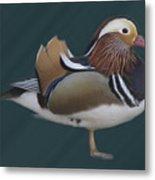 Mandarin Duck II Metal Print