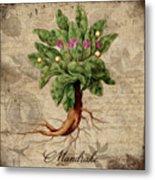 Mandrake Vintage Elements Botanicals Collection Metal Print