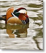 Mandrin Duck Going For A Swim Metal Print