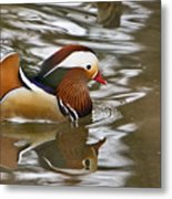 Mandrin Duck With A Purpose Metal Print