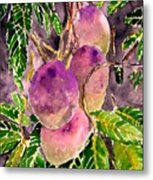 Mango Tree Fruit Metal Print