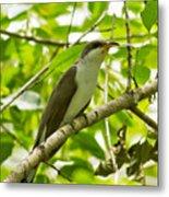 Mangrove Cuckoo Metal Print