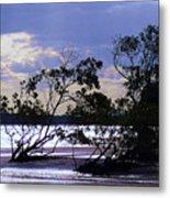 Mangrove Silhouettes Metal Print