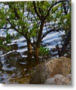 Mangroves And Coquina Metal Print