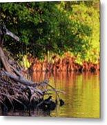 Mangroves Of Roatan Metal Print