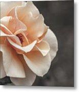 Manito Park Rose Metal Print