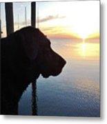 Mans Best Friend Sunset 3 411 Metal Print