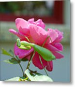Mantis And Rose Metal Print