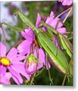 Mantis Mates In The Cosmos Metal Print