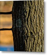 The Many Lines Of Nature Metal Print