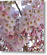 Many Pink Blossoms Metal Print