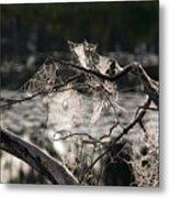Many Webs Metal Print