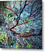 Manzanita Abstract Metal Print