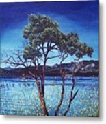Manzanita At Lake Hemet Metal Print