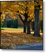 Maple And Arborvitae Metal Print