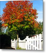 Maple And Picket Fence Metal Print by Olivier Le Queinec
