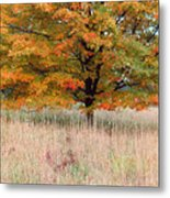 Maple And Tall Grass Metal Print