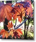 Maple Metal Print