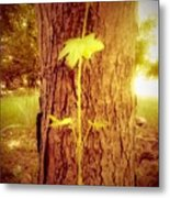 Maple Branch Growing From Trunk Metal Print