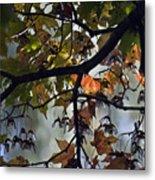 Maple Color Metal Print