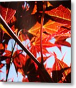 Maple Fire Metal Print