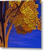 Maple In The Night Metal Print