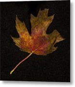 Maple Leaf Metal Print