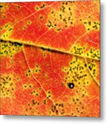 Maple Leaf Detail Metal Print