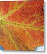 Maple Leaf On Water Metal Print