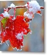 Maple Leaf With Snow Metal Print
