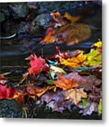 Maple Leaves-0001 Metal Print
