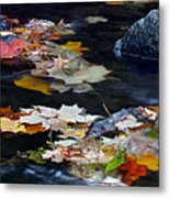 Maple Leaves-0005 Metal Print