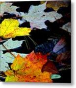 Maple Leaves-0011 Metal Print