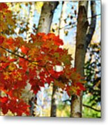 Maple Leaves And Birch Bark Metal Print