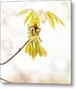Maple Leaves And Fruits Metal Print