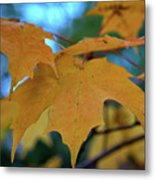 Maple Leaves In Autumn Metal Print