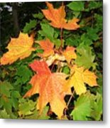 Maple Mania 10 Metal Print