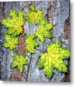 Maple Mania 12 Metal Print